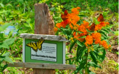 Benefit of Butterfly Gardens