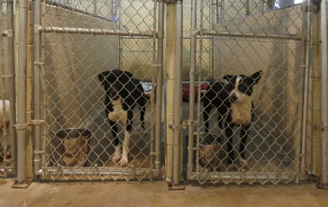 The Dark Truth Behind Animal Shelters