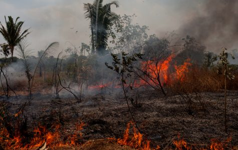 Amazon Set Ablaze: Are We to Blame?